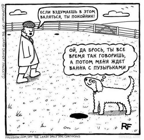 Юмор: Вся правда о жизни с собакой (13 фото)