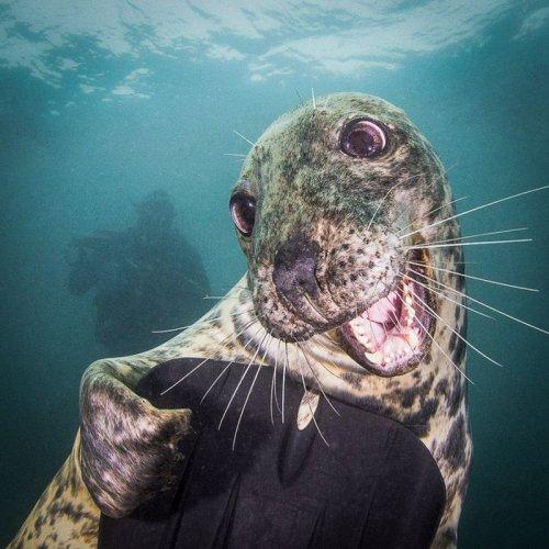 Самый дружелюбный в мире тюлень