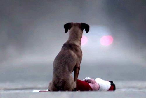 Душещипательный ролик об ответственности, который заставит Ваше сердце сжаться