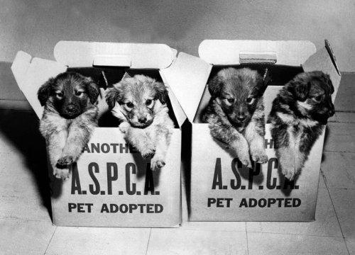 Милейшие винтажные снимки животных из архива Общества защиты животных (9 фото)