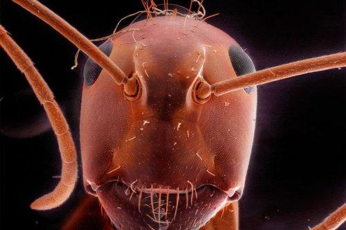Макро-портреты знакомых Вам насекомых (8 фото)