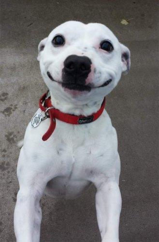 Просто для улыбки! (29 фото)
