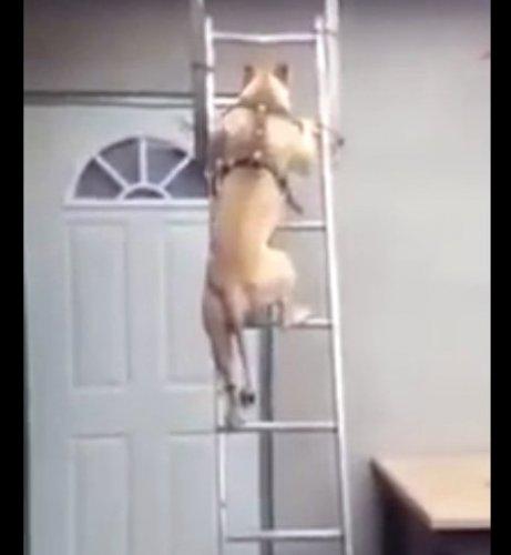 Удивительная собака