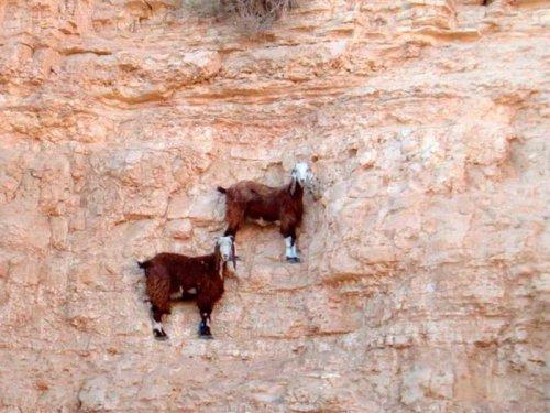 Это интересно:Фото, которые доказывают, что горные козлы — просто чумовые создания! (11 фото)