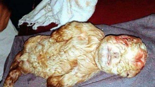 В Малайзии родился козленок с человеческим лицом