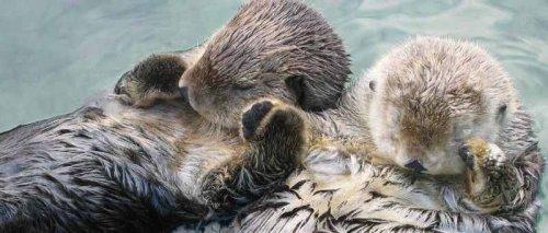Удивительные факты о животных (22 фото)