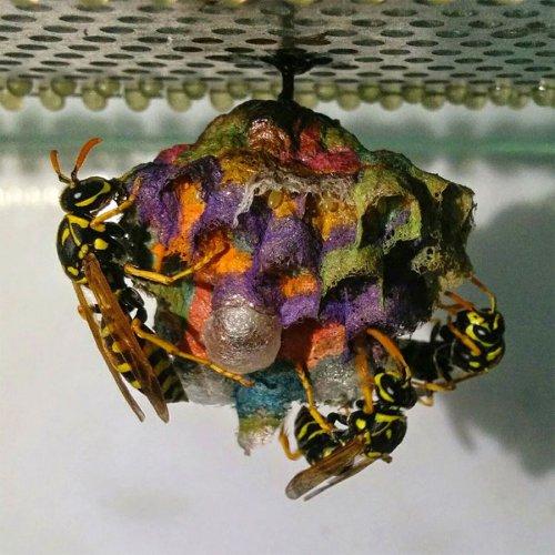 Цветное осиное гнездо (10 фото)