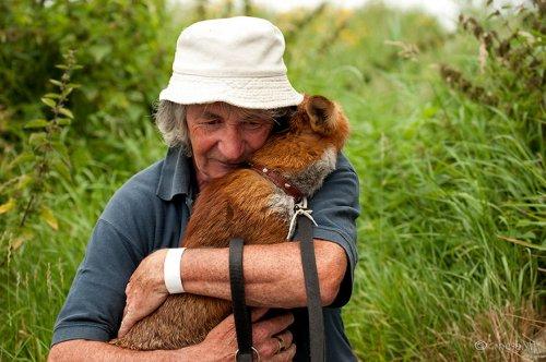 Лисицы не хотят уходить от спасшего их человека (9 фото)