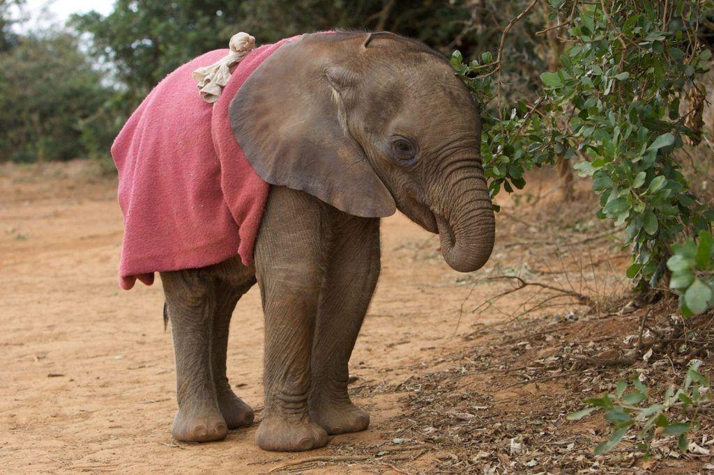 Картинки слонов смешные