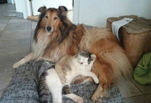 Неразлучные друзья  (9 фото)