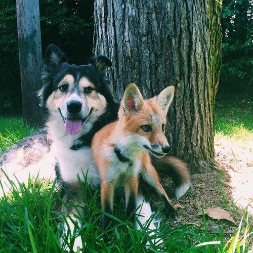 Лучшие друзья (12 фото)