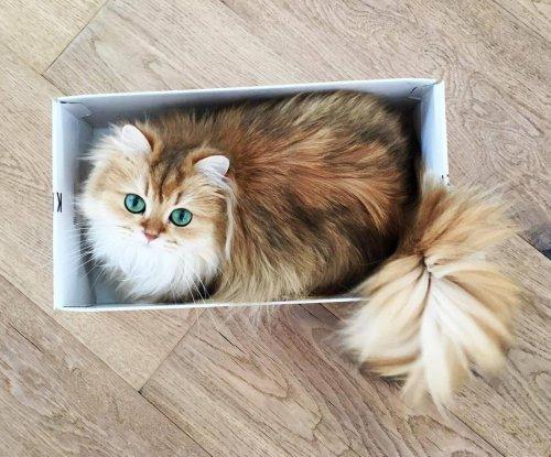 Кошка-кокетка с пушистым хвостом (11 фото)