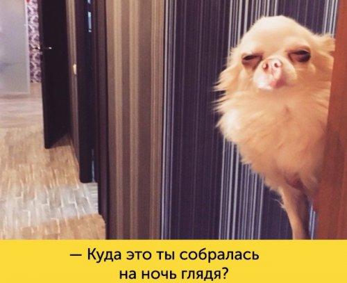Юмор : Собаки, мимике которых можно позавидовать (11 фото)