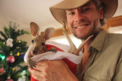 Маленькие кенгурята остаются умирать в сумке погибшей матери, пока не приходит он… (15 фото)