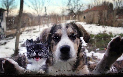 Юмор: Животные, которых забыли пустить домой (12 фото)