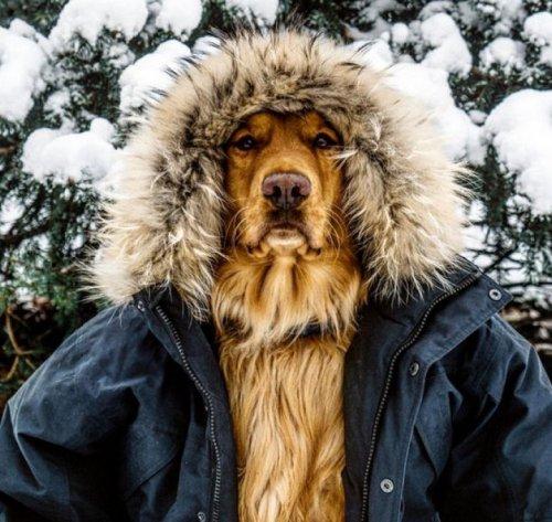 Обнаружен «самый фотогеничный пёс» на Земле (5 фото)