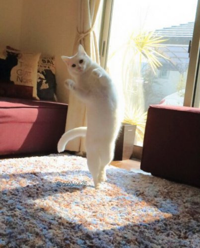 Кот-танцор (8 фото)