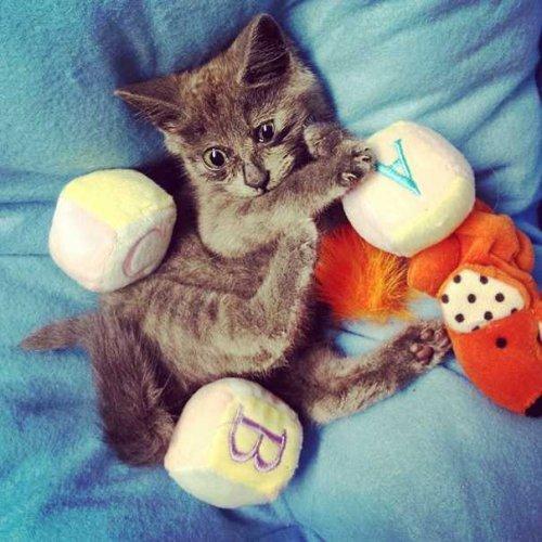 Трогательная история чудом выжившего кота (9 фото)