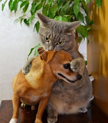 Собаки и кошки в одной обложке (35 фото)