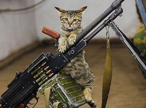 Кошки,готовые к завоеванию мира (10 фото)