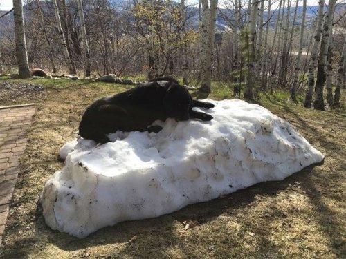 Лабрадор и последний снег (8 фото)
