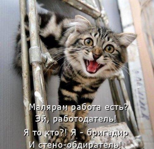 Котоматрица на радость (25 фото)