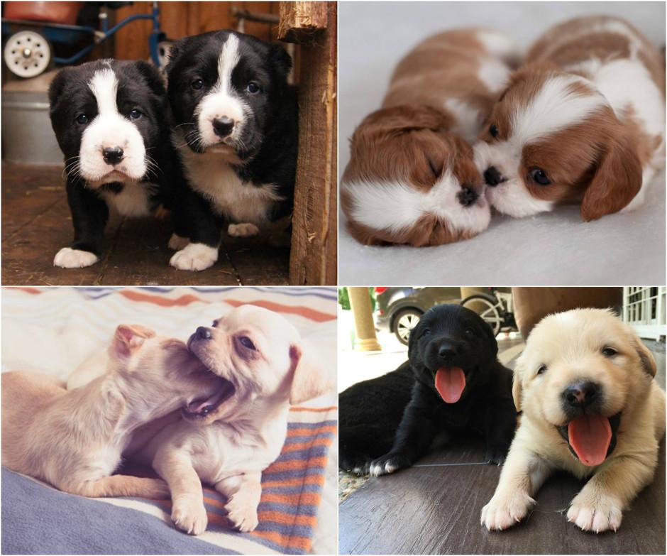 фото настоящих щенят