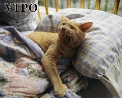 Распорядок дня глазами кошек (8 фото)