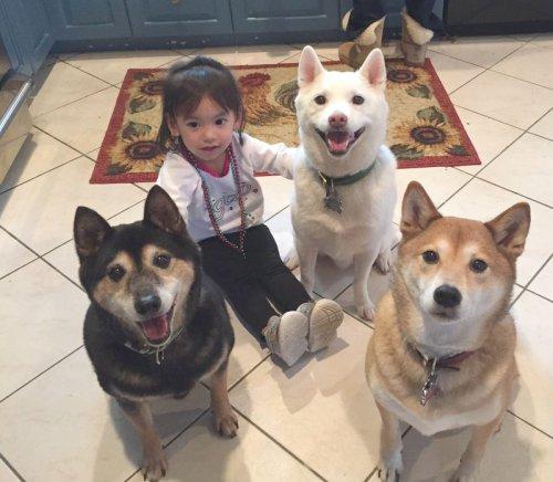 Человек приручал собак дважды