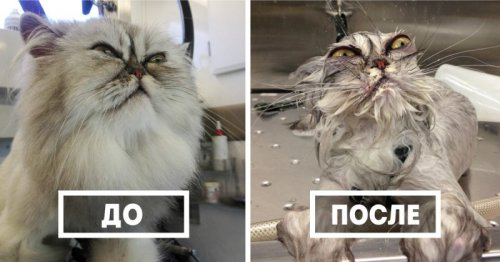 Юмор : Забавные животные до и после водных процедур (11 фото)