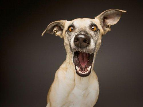 Портреты собак от фотографа Эльке Фогельзанг (9 фото)