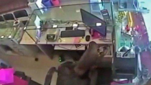 Хвостатый воришка ограбил ювелирный магазин в Индии
