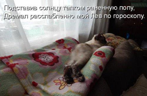 Позитивная котоматрица (30 фото)