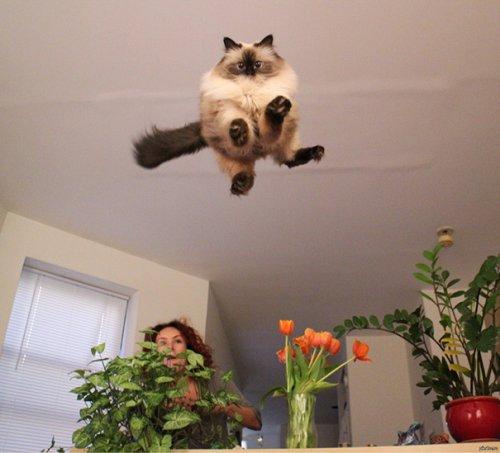 Юмор : Этих котов успели сфотографировать в нужный момент (10 фото)