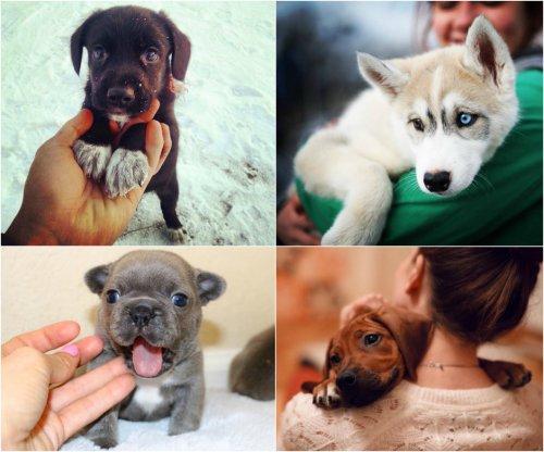 Умилительные щенки (28 фото)