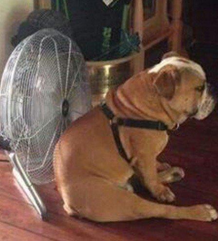 Способы охладить свою собаку в летний зной (10 фото)