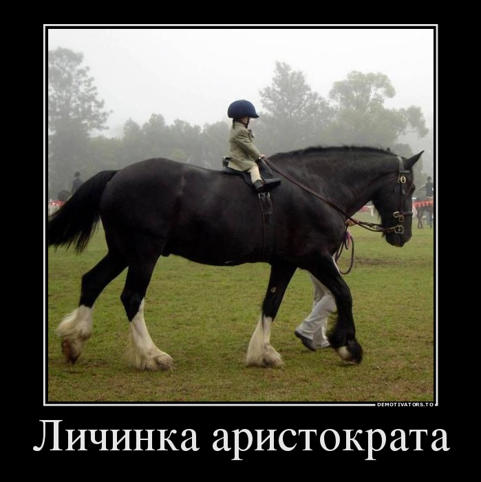 девушка демотиватор год лошади стала для