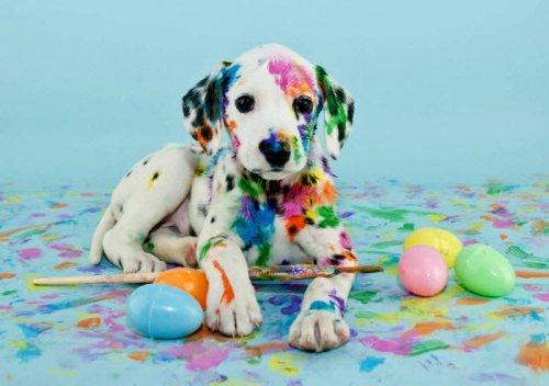 10 ложных фактов о собаках, в которые мы все верим