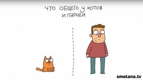 Юмор: Что общего у котов и парней?