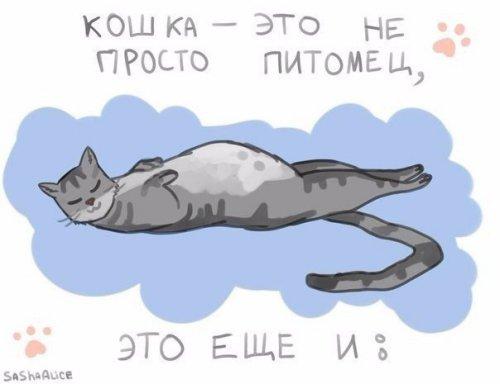 Кошки-это... (6 фото)