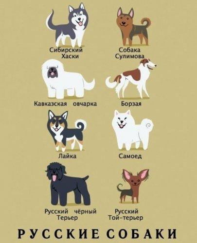 Происхождение собак (8 фото)