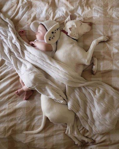 Ласковый щенок любит вздремнуть с малышом (8 фото)