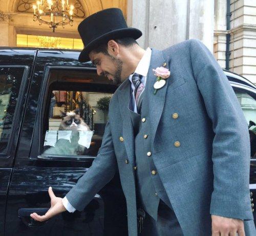 Сердитый Котик осмотрел достопримечательности Лондона (8 фото)