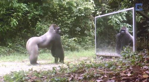 Юмор : Эти дикие животные увидели своё отражение! Вот это реакция!