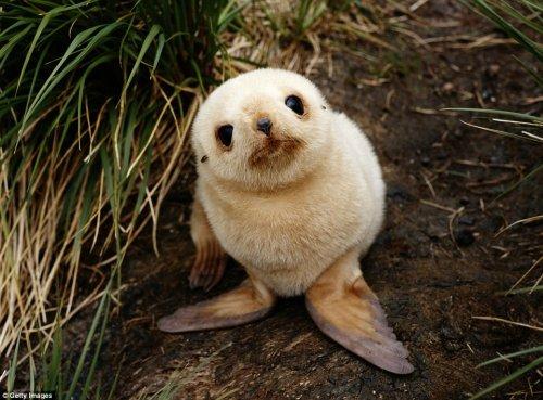Очаровательные детёныши животных, которые вызовут у вас улыбку (15 фото)