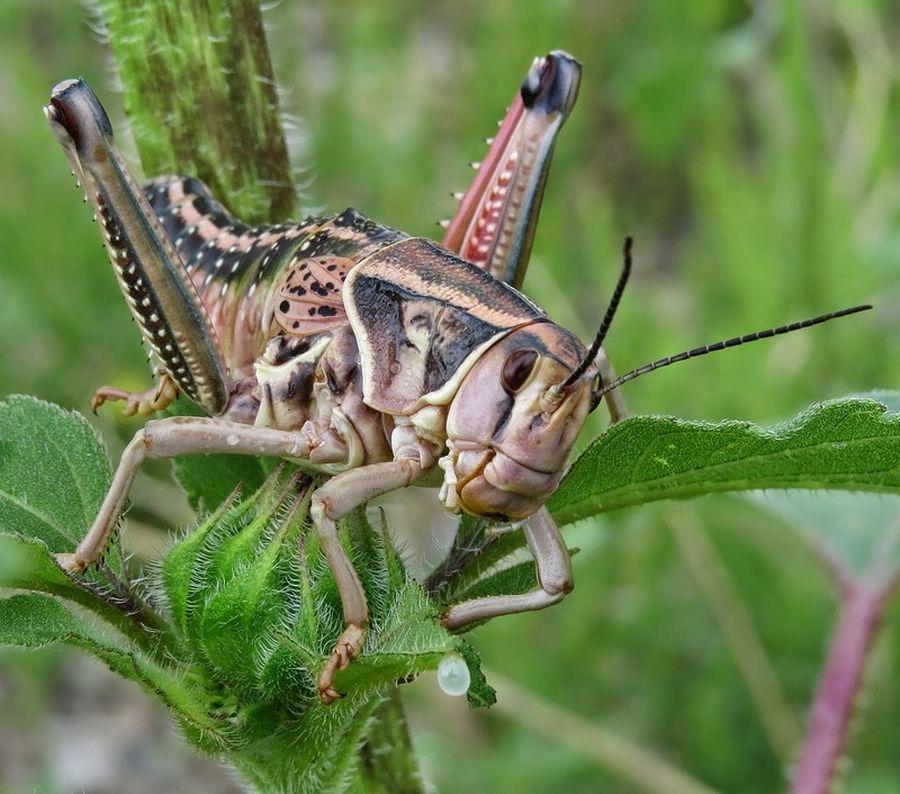 современном фотки насекомых разных края нужно смочить