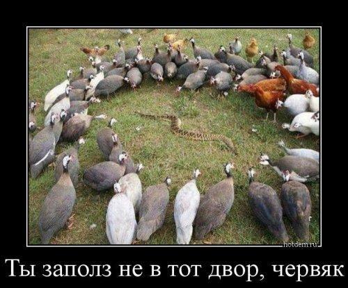 Демотиваторы для всех! (15 (фото)
