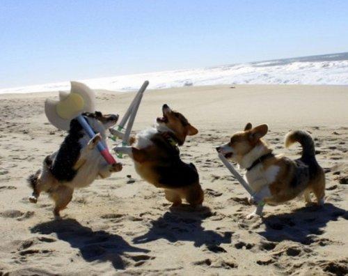 Собаки на пляже (10 фото)