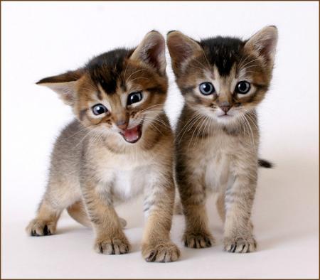 Очередная подборка милых котят (16 фото)