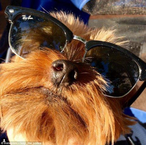 У собак тоже есть летний отдых (23 фото)